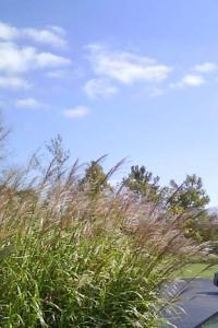 Grass & sky